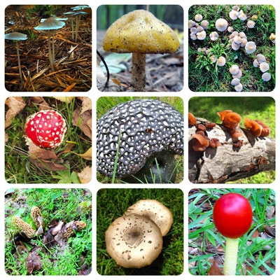 Toadstools and Mushrooms. (neilsperry.com)