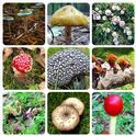 Toadstools and Mushrooms. (neilsperry.com)