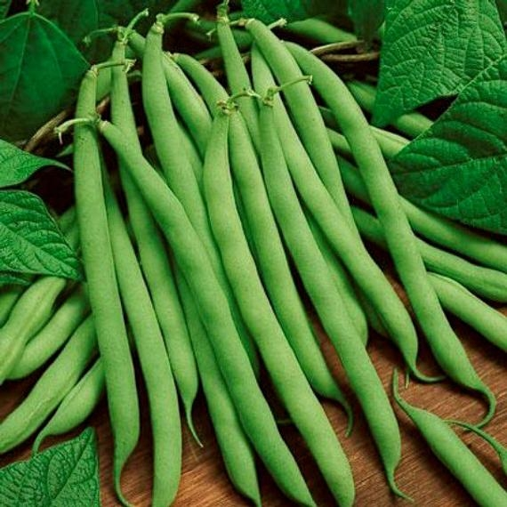 Here are the Blue Lake green beans. (etsy.com)