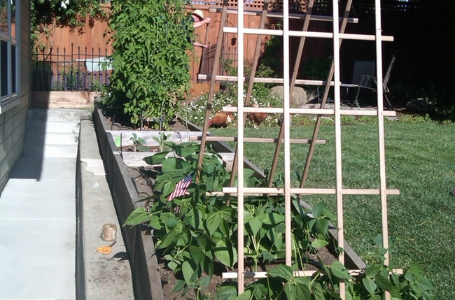 Provide strong and tall support for pole beans. (hensongs.com)