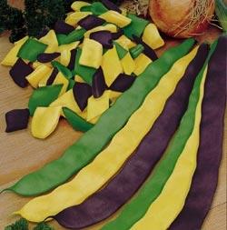 Colors of Romano beans (chubeza.com)