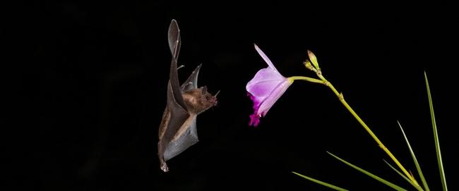 Bat (uc.edu)