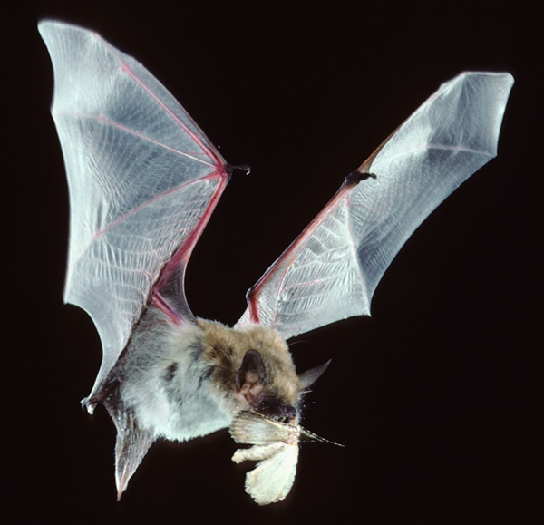 And moths.  (ucanr.edu)