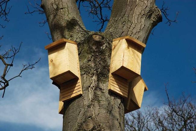 Bat houses (mountaintrue.org)