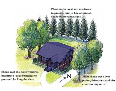 Plant smart for house shade. (northwinbuilders.com)