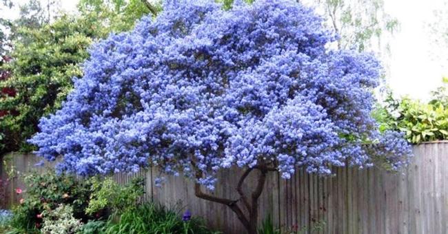 Plant blossoming trees! (rockindeco.com)