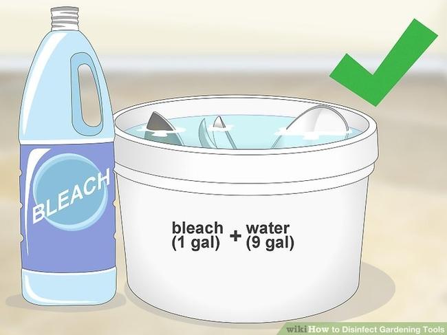Disinfect garden tools. (wikihow.com)