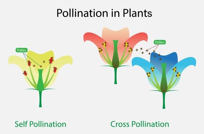 About pollination. (scienceabc.com)