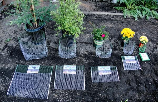 Use a gopher guard when planting. (thebulkdepot.com)