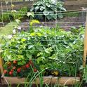 Small space gardening. (planterspost.com)