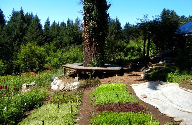 Alan Chadwick Garden at UC Santa Cruz. (alanchadwick.org)