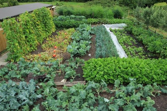 Abundant vegetable garden. (pinterest.com)