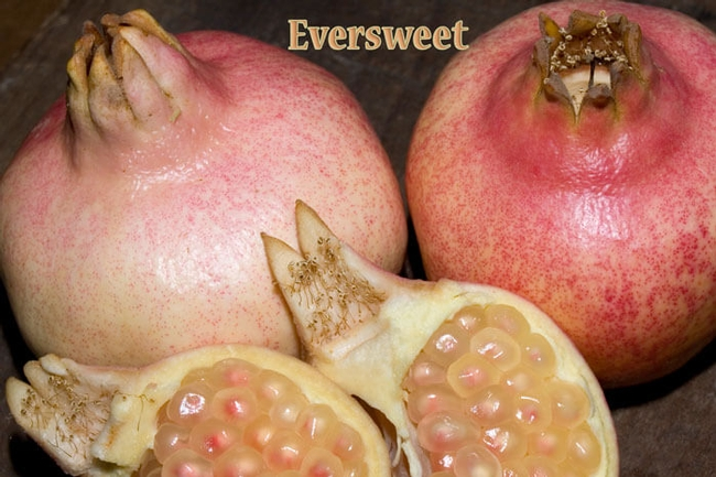 Eversweet pomegranate. (louiesnursery.com)