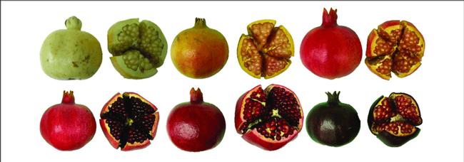 A.maz.ing Pomegranates! (richfarming.com)