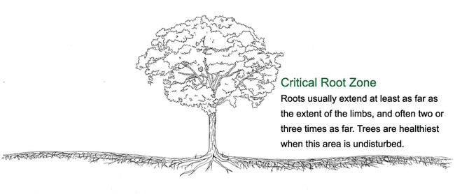 Understanding the extent of the root zone is critical. (atlantatreecommission.com)