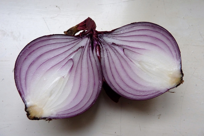 Cut onion--those layers are modified leaves. (indianapublicmedia.org)
