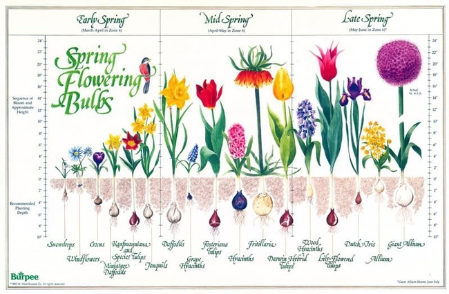 Have we made the case for spring flowering bulbs, corms, tubers, and rhizomes? (pinterest.ca)