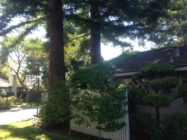 Redwood trees are not recommended as shade trees in Napa County because they require twice the amount of water as the other trees suggested in the article. (city-data.com)