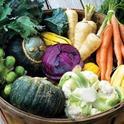 Fall veg (charlestonjfs.com)