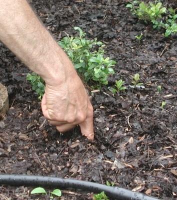 Finger test soil moisture 1-2 inches down. (leereich.com)