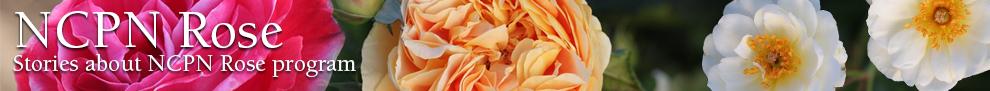NCPN Roses - Header