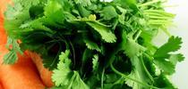 cilantro for Pest News Blog