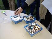 Evaluating fresh-cut mushrooms held at different storage temperatures.