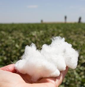 cottoninhand