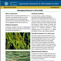 Fact Sheet #2: Managing Potassium in Rice Fields