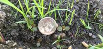 IMG 3533 for UC Rice Blog Blog