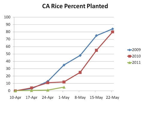 Rice planted