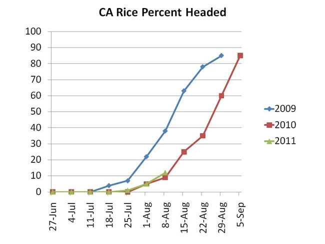 Rice headed