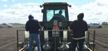 UCCE Sorghum Seeding Rate Trial in the Sacramento County Delta. for SJC and Delta Field Crops Blog