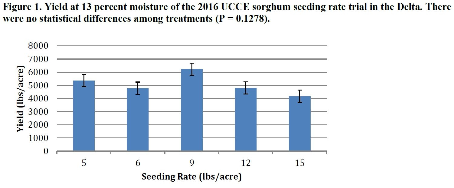 Sorghum Seeding Rate Trial Sjc And Delta Field Crops Anr Blogs