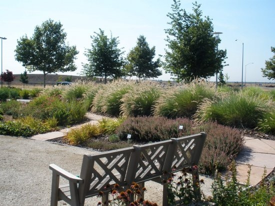 Backyard Landscaping Elk Grove Ca : San joaquin county master gardener demonstration garden