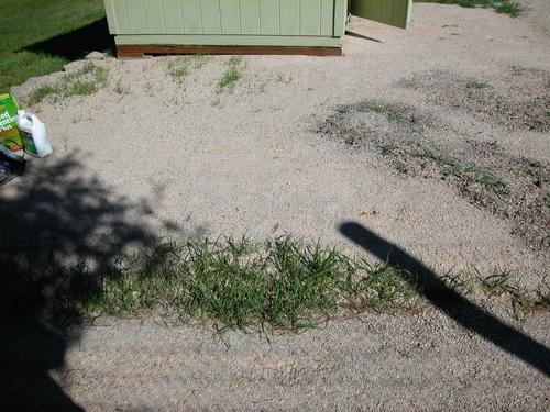Grass in DG path