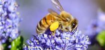 Bee 2 for UC Master Gardeners- Diggin' it in SLO Blog
