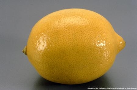 Lemon 103013021