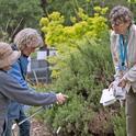 Master Gardeners in Action