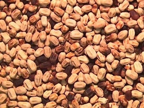 Western Drywood Termites - UC Master Gardeners- Diggin' it