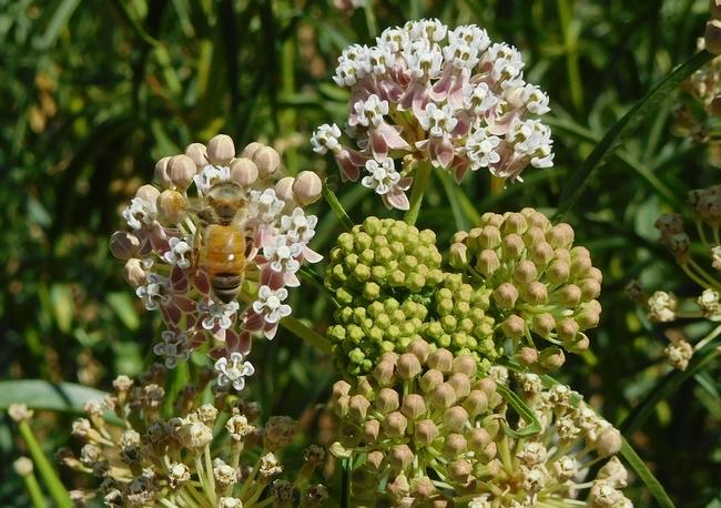Bee Flower01c[16287]