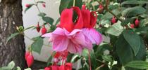 Photo By Linda Lewis Griffith for UC Master Gardeners- Diggin' it in SLO Blog