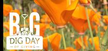 Garden poppy for UC Master Gardeners- Diggin' it in SLO Blog