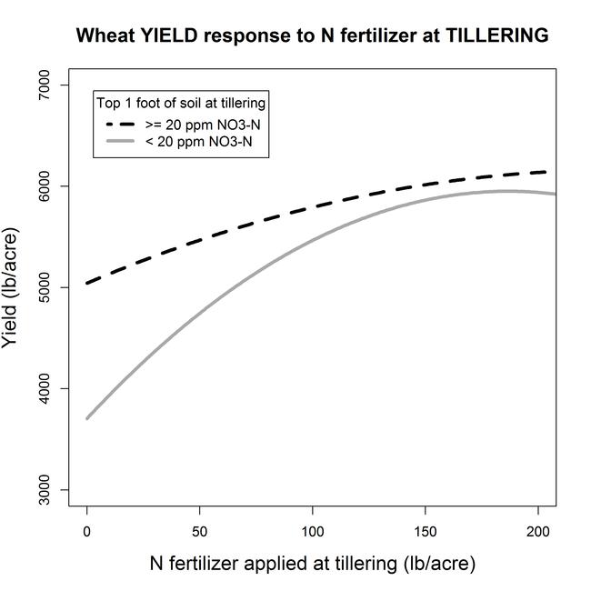 Tiller Yield N response SoilNitrate20ppm