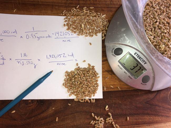 Seeding Rate Caculator