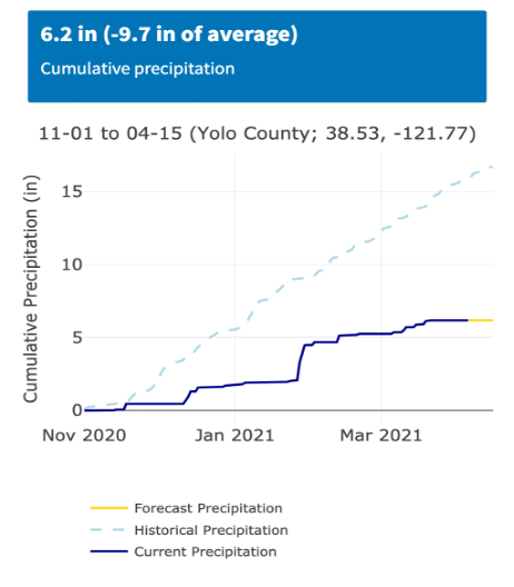 """Figure 1 Cumulative rainfall from November 1st 2020 to April 6, 2021 (from the UC Davis Small Grains California Weather Web-Tool). Historical averages are typically around 16.6"""" for this time of the year. This year the area near Davis, CA has received 6.2"""" (37% of the annual average)."""