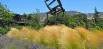 Photo credit: Susan Morrison for UC Master Gardener Program Statewide Blog Blog