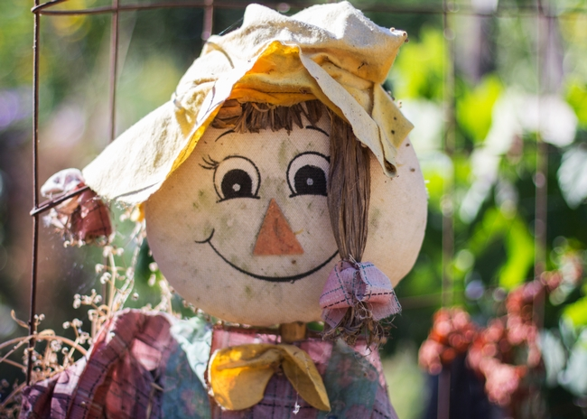 Scarecrows are a staple decoration in autumn but they also serve a purpose in the garden of scaring off unwanted birds and animals. Photo credit: Melissa Womack, UC Master Gardener Program