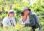Volunteers extend research based information on home horticulture, pest management, and sustainable landscape practices. (Photo credit: Evett Kilmartin © UC Regents)