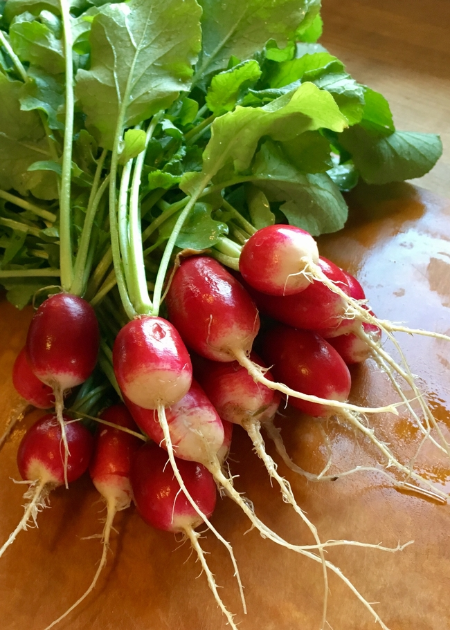 "First Place, IncredibleEdibles: ""Ravishing Radishes,"" by Anne McDermott, Orange County"